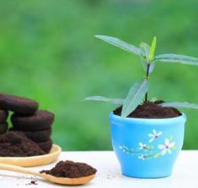 Cafe para las plantas